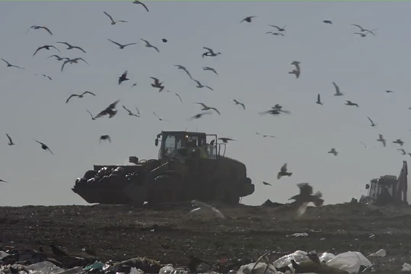 birds flying over vehicle in landfill