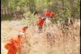 A line of men in orange jumpsuits working in a field of tallgrass.