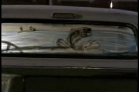 The back window of a pick up truck with a decal of a large fishing jumping out of water.