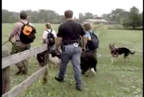 Four members of a search team and their dogs walk past a fence as they search for Jodi.