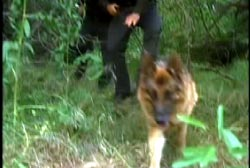 A dog leads two officers through dense foliage.