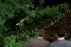 Police investigators stumbling across Tanya's body in the woods