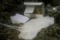 A box of plastic gloves and ties on the dirt floor