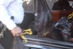 A police officer taking trashbags out of the back of a car
