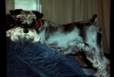 Dogs Who Sense Diseases
