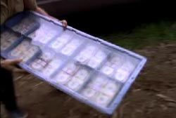 A thief holding a blue pallet of money