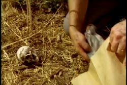 An investigator kneeling down next to a small ceramic skull left at the scene