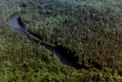 A River running through the Allagash wilderness