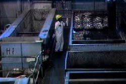 A man with a white jumper and yellow hardhat on opperating machinery in the factory