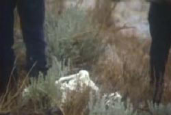 Two police investigators looking down on Don's body in a patch of grass