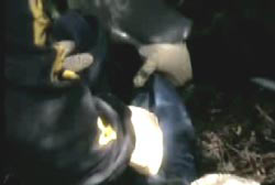 Investigator in latex gloves rummaging through a blue and black backpack in the forrest