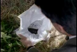 Investigator looking into a plastic bag that contains human flesh