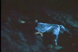 Normal Ladners lifeless body in the middle of the woods at night