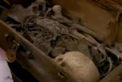 Skeletal remains of a body in a footlocker