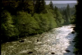 Man wading through a river in the middle of the forrest